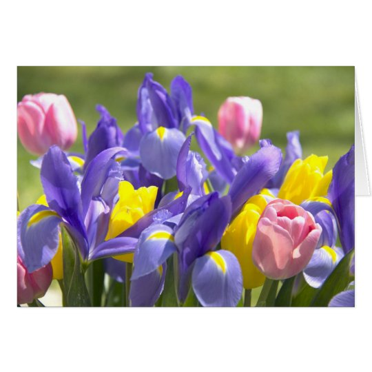Tulips And Irises Flowers Greeting Card