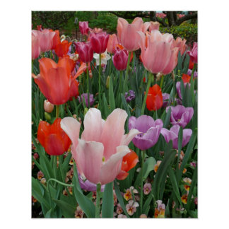 Tulips and Pansies 2 Poster