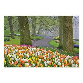 Tulips and roadway, Keukenhof Gardens, Lisse, Art Photo