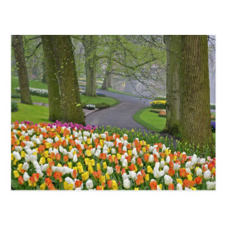 Tulips and roadway, Keukenhof Gardens, Lisse, Postcard