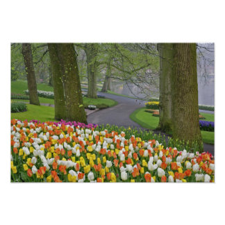 Tulips and roadway, Keukenhof Gardens, Lisse, Poster