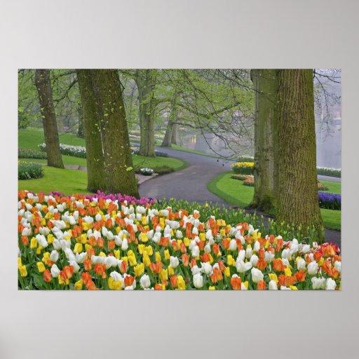Tulips and roadway, Keukenhof Gardens, Lisse, Print