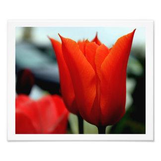 Tulips Art Photo
