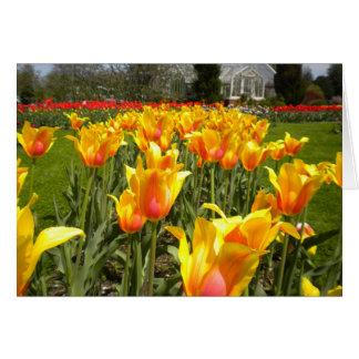 Tulips At Elizabeth Park Card