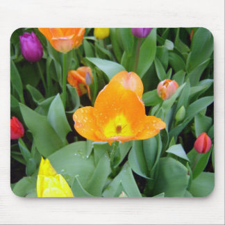 Tulips at the Eden Project, Cornwall, UK Mouse Mat