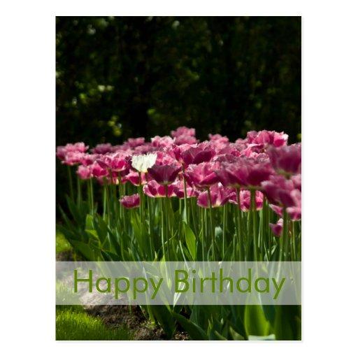 Tulips Birthday Postcard | Geburtstagskarte Tulpen