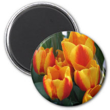 Tulips, bright orange! 6 cm round magnet