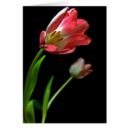 Tulip's Card