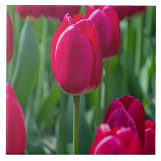 Tulips ceramic photo tile