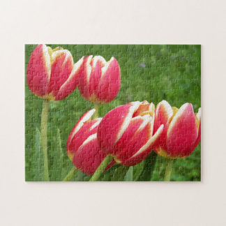 Tulips Closeup Jigsaw Puzzle