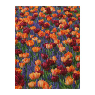 Tulips Colour Burst Wood Canvases
