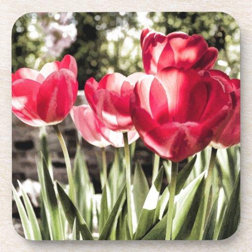 Tulips Beverage Coasters