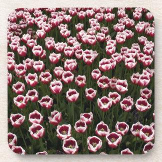 Tulips Coasters