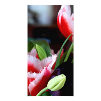 tulips custom photo card