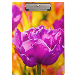 Tulips Enchanting Violet Clipboard