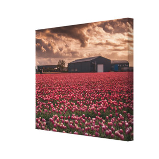 Tulips field Holland Landscape Single Canvas Canvas Print