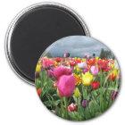 Tulips Field Magnet