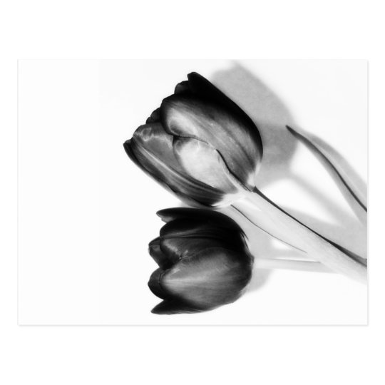 Tulips Fine Art Photography in Black and White