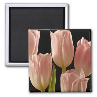 Tulips for You Magnets