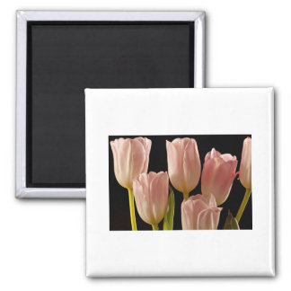 Tulips for You Square Magnet