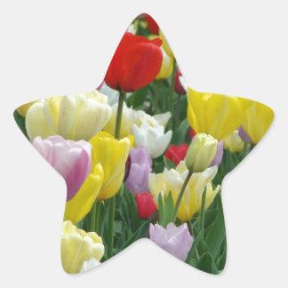 Tulips from Holland, Springtime at Keukenhof Star Sticker