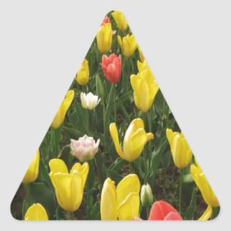 Tulips from Holland, Springtime at Keukenhof Triangle Sticker