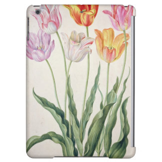 Tulips, from the 'Nassau Florilegium' (w/c on pape