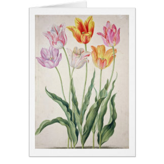 Tulips, from the 'Nassau Florilegium' (w/c on pape Card
