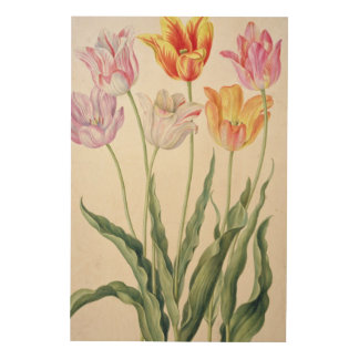 Tulips, from the 'Nassau Florilegium' (w/c on pape Wood Print