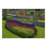 Tulips, Grape Hyacinth, and daffodils,