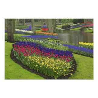 Tulips, Grape Hyacinth, and daffodils, Photo Print