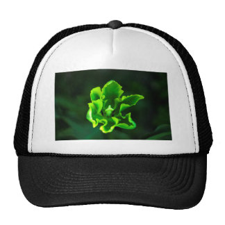 Tulips Green.jpg Cap