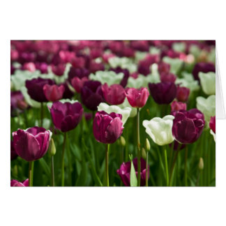 Tulips Greeting Card | Grusskarte Tulpen