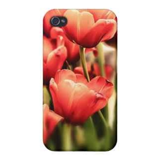 Tulips in artistic pastel colors close up iPhone 4/4S cases
