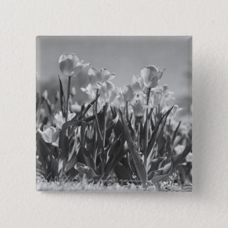Tulips in bloom 15 cm square badge