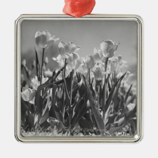 Tulips in bloom christmas ornament