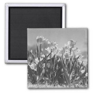 Tulips in bloom magnet