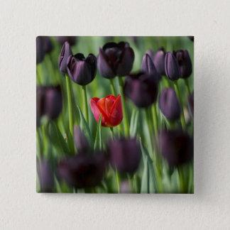 Tulips in Keukenhof Gardens, Amsterdam, 15 Cm Square Badge