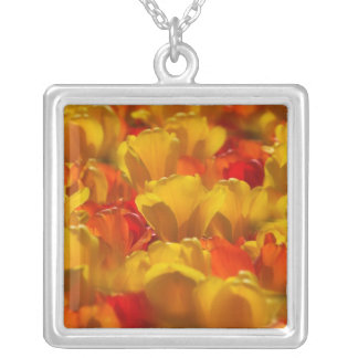 Tulips in Keukenhof Gardens, Amsterdam, 2 Silver Plated Necklace