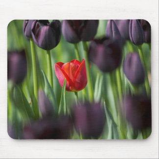 Tulips in Keukenhof Gardens, Amsterdam, Mouse Mat