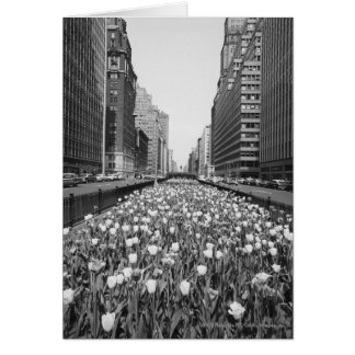 Tulips in middle of city street card