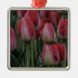 Tulips in the Spring Square Metal Christmas Ornament