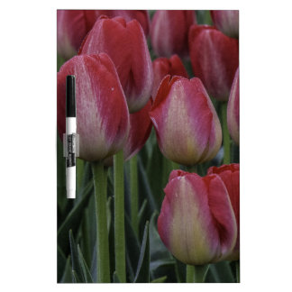 Tulips in the Spring Dry-Erase Whiteboards