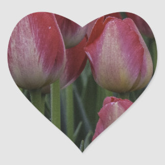Tulips in the Spring Heart Sticker