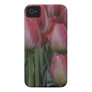 Tulips in the Spring iPhone 4 Case