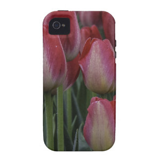 Tulips in the Spring iPhone 4 Cases