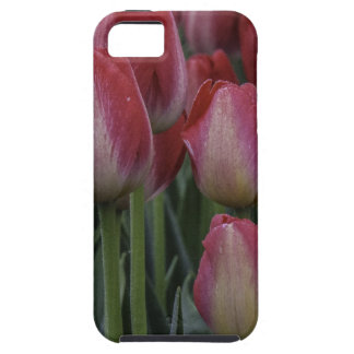 Tulips in the Spring iPhone 5 Case