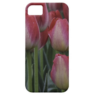 Tulips in the Spring iPhone 5 Cases