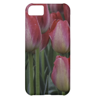 Tulips in the Spring iPhone 5C Covers