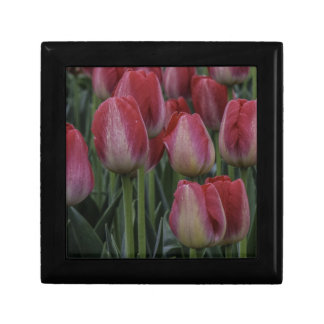 Tulips in the Spring Keepsake Boxes
